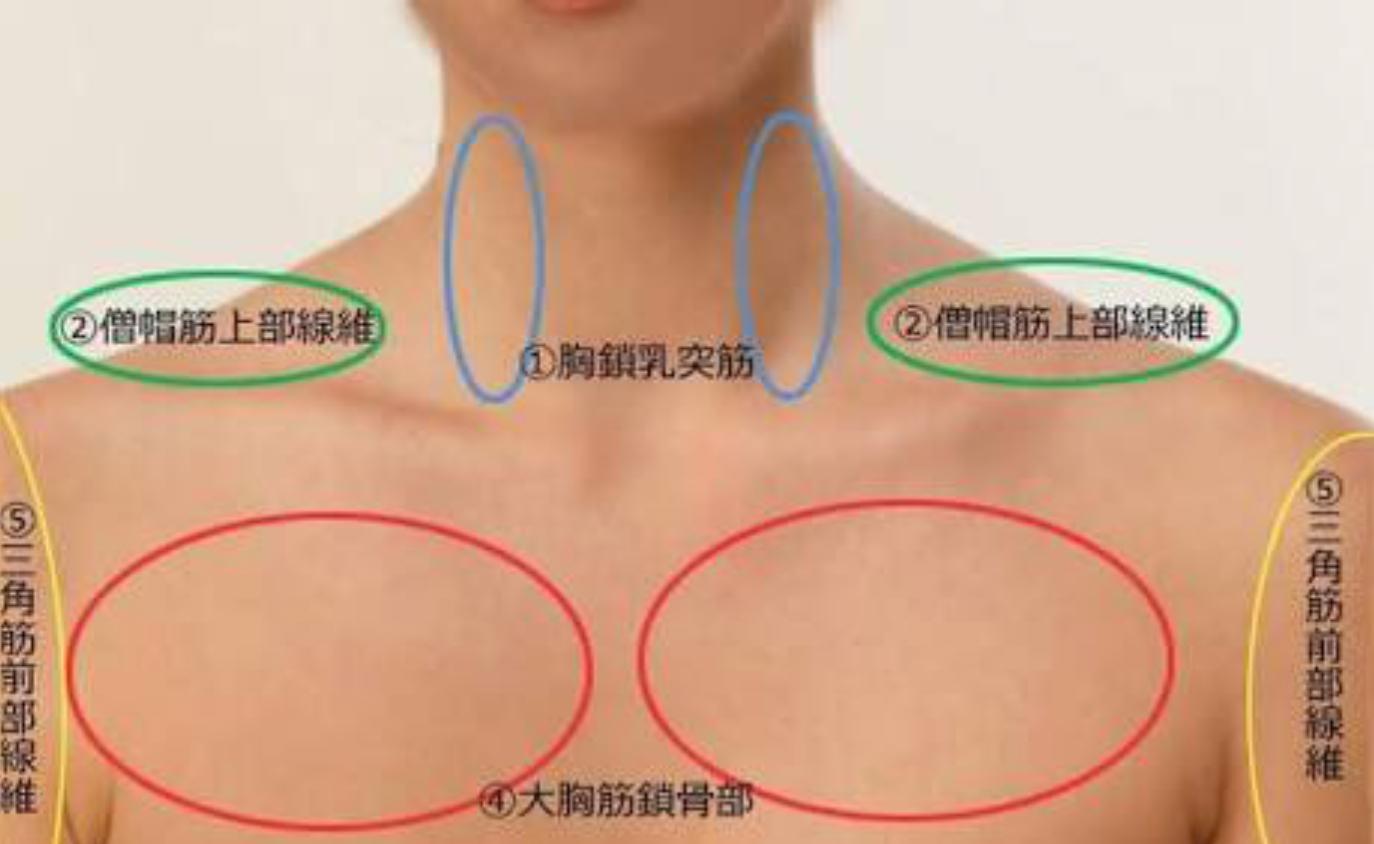 胸鎖乳突筋 小顔